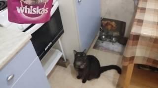 Угостили кота аппетитным блюдом, кот в шоке!