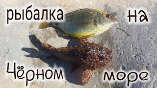 Рыбалка на Чёрном море с берега морской карась зеленушка скорпена морской окунь Fishing in the Blac