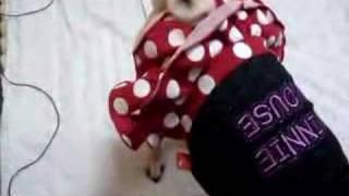 Pug Britney Winnie Clothes
