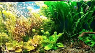 Небольшой обзор аквариумов и кормление рыб