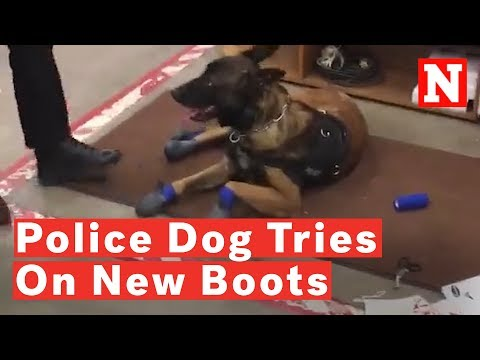 Tony Sandoval on The Breeze - Watch: Police Dog's Funny Reaction To New Snow Boots Goes Viral.