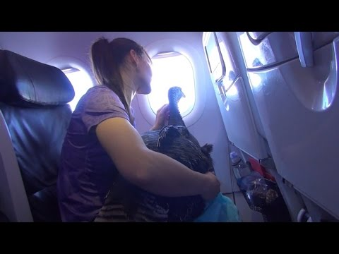 Woman Takes Service Turkey on Flight for Trip to Scatter Husband's Ashes