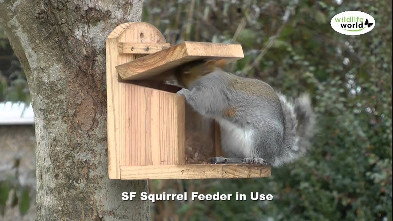 The Wildlife World Sf Squirrel Feeder Product In Use Video