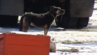Владимир Путин разрешил местным властям отлавливать бродячих животных