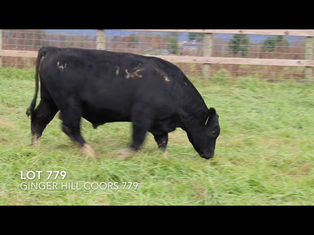 Ginger Hill Angus Lot 779