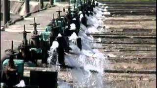 Обзор Суб Про в рыбоводстве