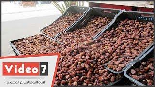 واحة سيوة بها 700 ألف نخلة تنتج 100صنف من البلح