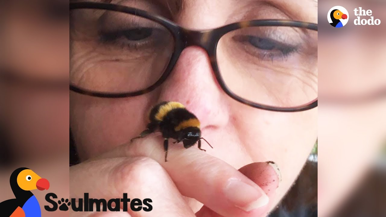 Bee and Woman Become Best Friends After Garden Rescue   The Dodo Soulmates