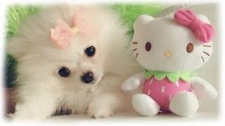 Mango & Coconut: Puppy Vlog