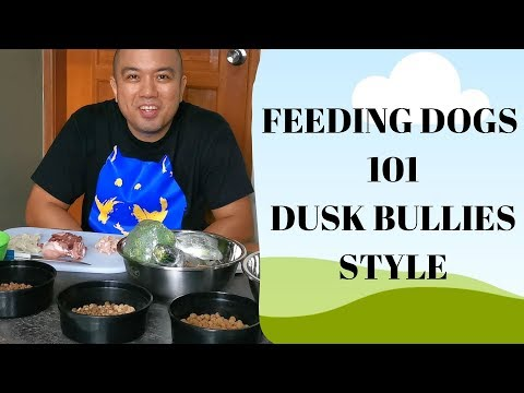 DOG FEEDING 101 - DUSK BULLIES PINOY STYLE