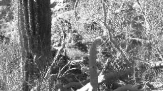 Hiking in the Desert - Joshua Tree National Park and Arizona Desert