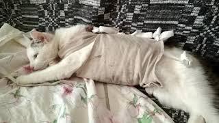 Кошка после операции чувствует себя нормально.