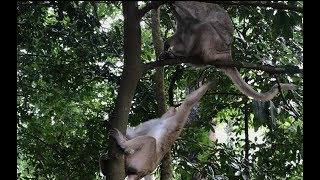 Good  Mum Protect Her Baby On The Trees