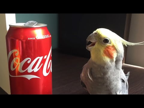 Funny Parrots Going Crazy - Cutest Parrots Compilation 2020 #2