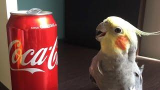 Funny Parrots Going Crazy  Cutest Parrots Compilation 2020 #2