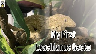 Just Bought My First Leachianu…