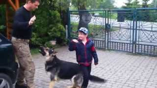 Owczarek niemiecki obrona dziecka