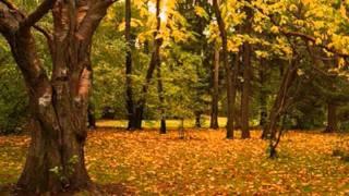 Осеннее настроение.wmv