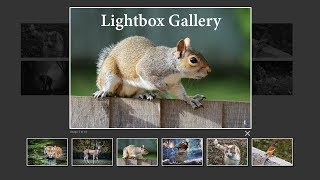 How To Create Image Gallery In HTML, CSS and Javascript 💡 Lightbox Gallery