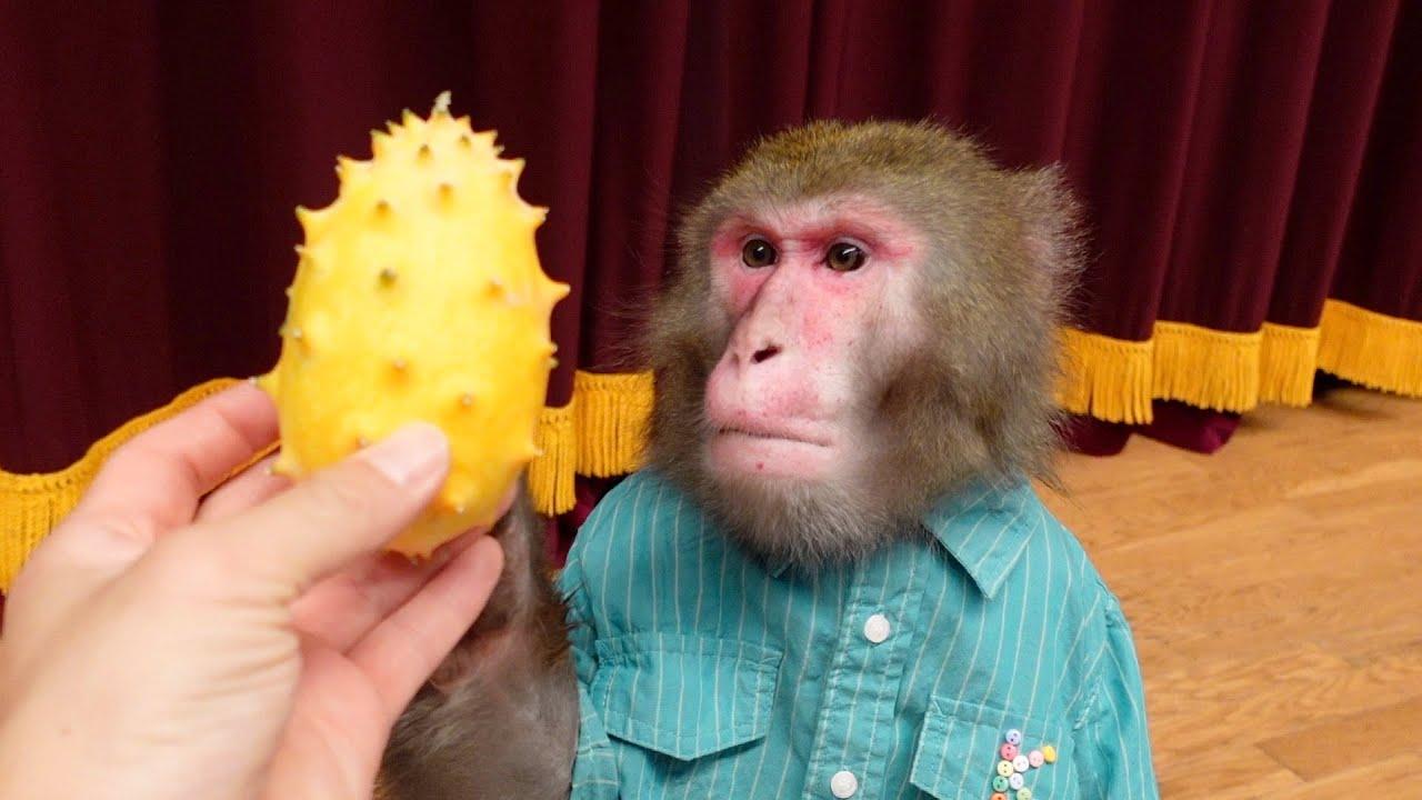 「悪魔の実」にしか見えない果物をお猿さんにあげてみた…食べる?