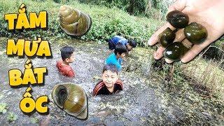 Tony | Thử Thách Bắt Ốc Dưới Mưa - Catching Snail In Rain