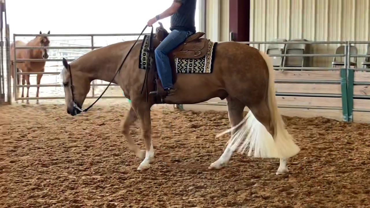 Download Huntin For My Zipper 2015 AQHA Palomino Gelding for Sale