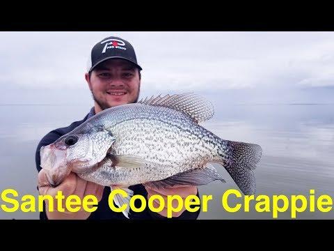 Santee Cooper Crappie Fishing