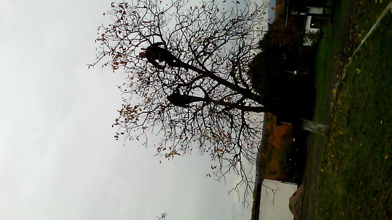 Армия приколы 2016 зрываем листья с деревьев