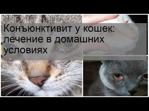 Вопрос: Как лечить конъюнктивит у кошек?