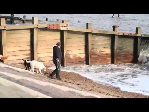 Documentary- Guide Dog Hazards