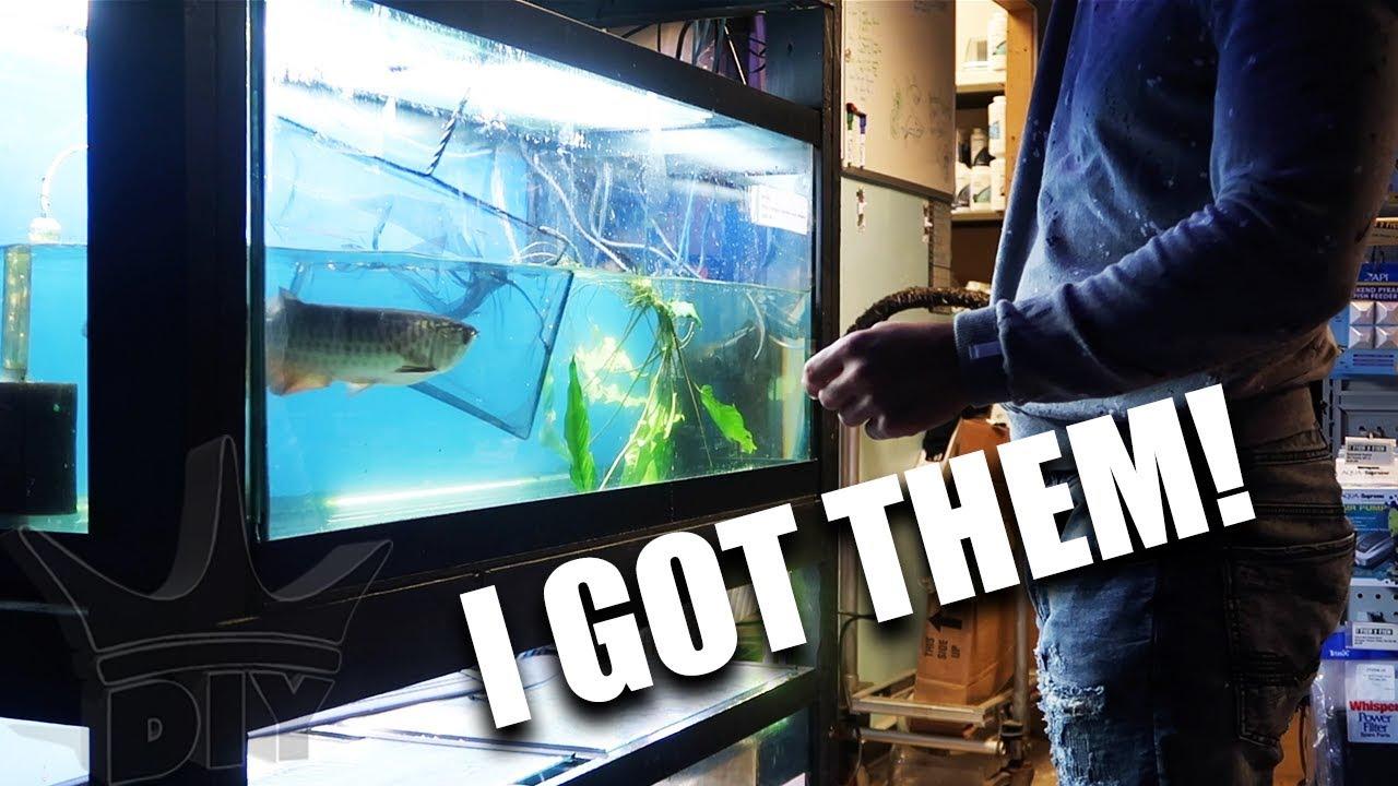 new-fish-i-got-them-all