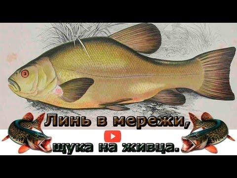 ловля рыбы на морду и мережу