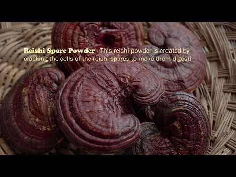 Reishi Mushroom, A Shen Tonic and Immune Modulator