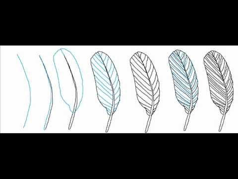 how to draw a simple feather step by step drawing tutorial youtube. Black Bedroom Furniture Sets. Home Design Ideas