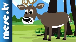 Vilmos Gryllus: Deer | Half Minute Song | MESE TV