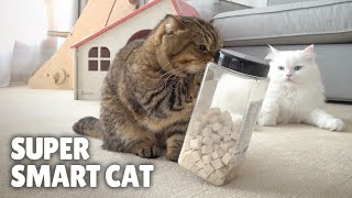 Super Smart Cat! Takes Out Treats by Itself! | Kittisaurus