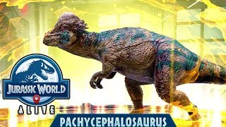 PACHYCEPHALOSAURUS NEW EPIC UNLOCKED!!! (JURASSIC WORLD ALIVE)