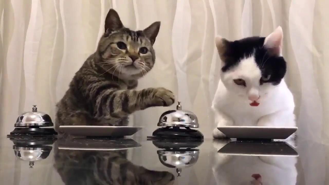 Котики звонят в звонок и требуют еду Смотрите, что будет дальше. Презабавное видео