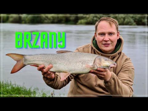 Jak złowić Brzanę?  Wyprawa na Trent - BRZANA Królowa rzek! WEDKARSKI BZIK
