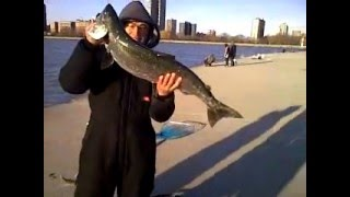 15lbs king salmon caught on power line fishing at  the lake michigan in chicago.