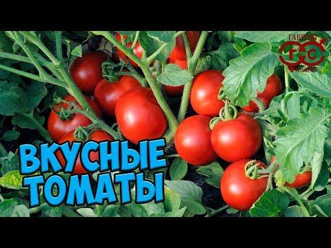 Семена томатов 🍅 Самые вкусные томаты для теплиц 🍅 ГАВРИШ