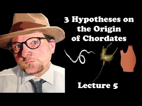 Lecture 5 Three Hypotheses on the Origin of Chordates