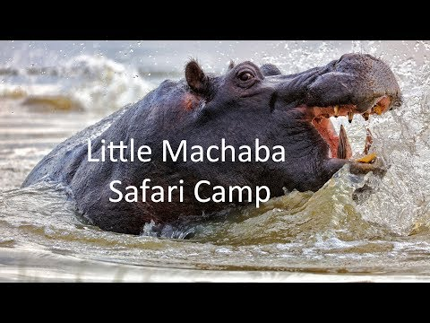Little Machaba Luxury Safari Camp, Botswana