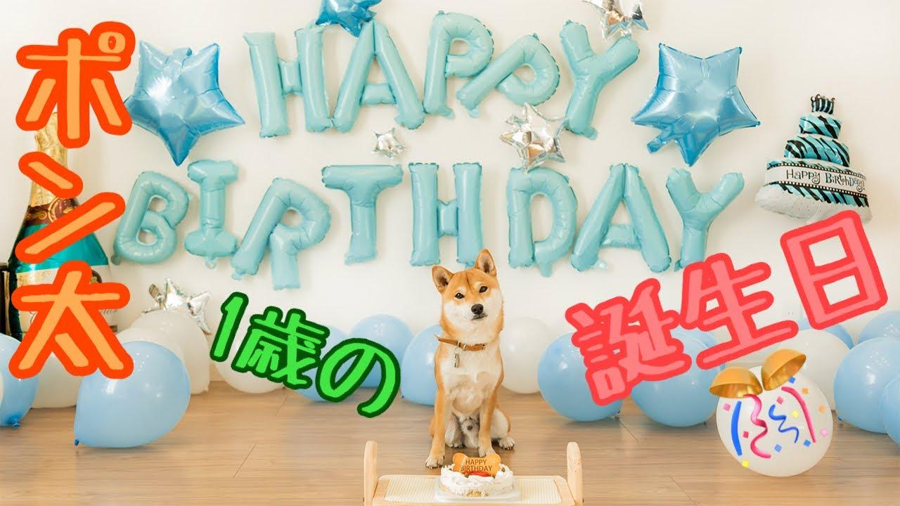 豆柴ポン太君 誕生日をケーキと歌で祝ってみました✨子供のお祝いの歌も微妙な顔をしながら聞いてくれました!
