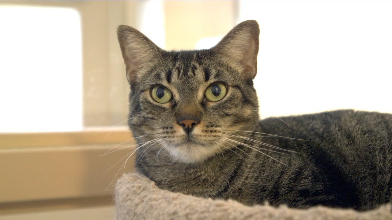 Port St. Lucie Community Cat Program - YouTube