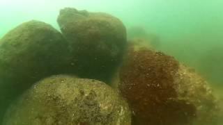 Рыба еж кефаль кораллы(Ныряю без ружья., 2016-03-03T13:23:06.000Z)