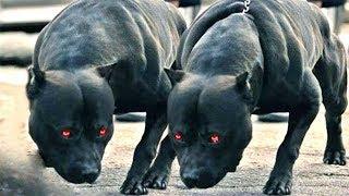 7 كلاب محظورة حول العالم اذا رأيتهم فأعلم انك ميت !؟