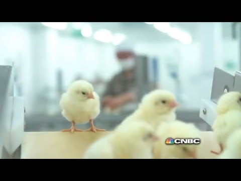 McDonald's Chicken in China | Inside China