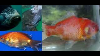 Лечение болезней аквариумных рыбок!Профилактика.