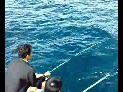 ตกปลาอินทรีระยอง.wmv